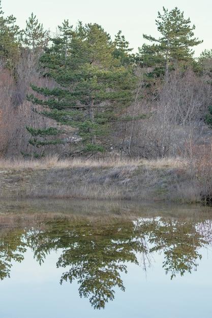 Forêt Reflétée Dans Le Lac D'eau Photo gratuit