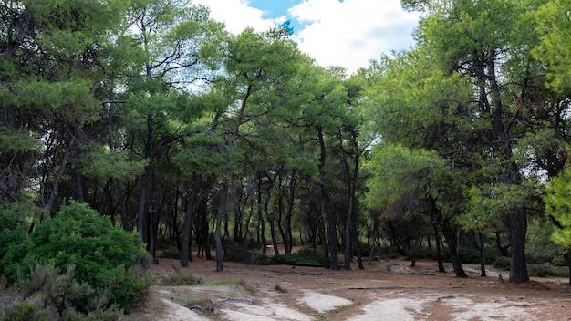 Forêt Avec Sapins Et Buissons Verts Luxuriants, Branches Tombées En Grèce Photo gratuit