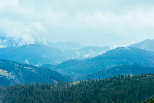 Forêt de sapins dans les montagnes verdoyantes Photo gratuit