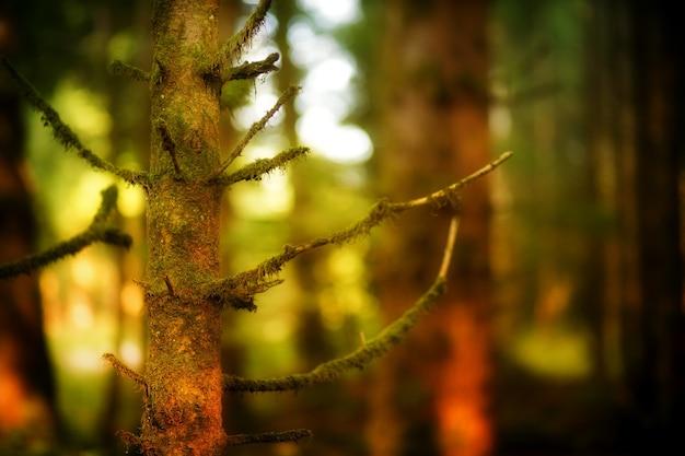 Forêt Sombre Et Arbres Photo gratuit