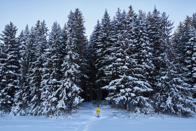 Forêt sombre, promenade dans les bois avant noël Photo Premium