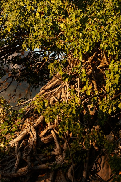 Forêt Tropicale Capturée à La Lumière Du Jour Photo gratuit
