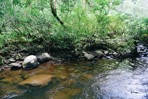 Forêt tropicale humide avec roche et vert mos dans la forêt tropicale sauvage. rivière rivière ruisseau cascade arbre nature paysage Photo Premium