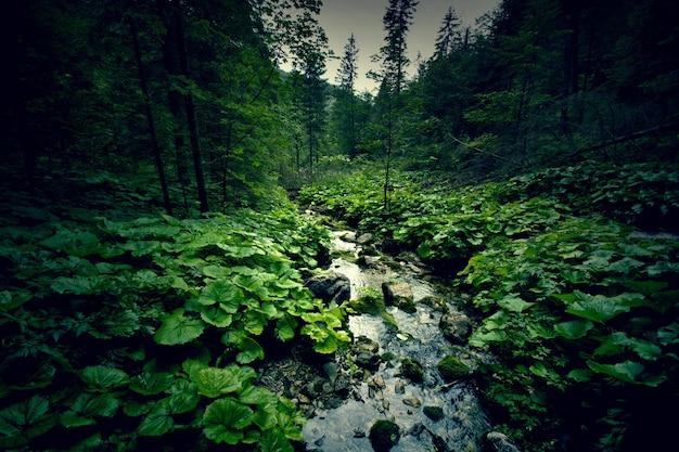 Forêt vert foncé et rivière. Photo gratuit