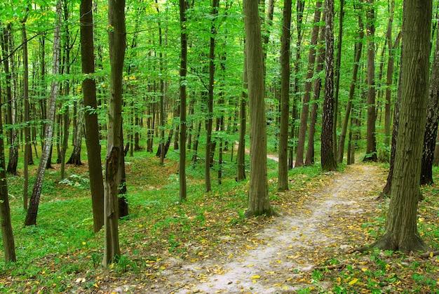 Forêt Verte Avec De Grands Arbres Photo Premium