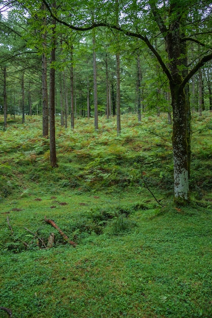 Forêt verte Photo Premium