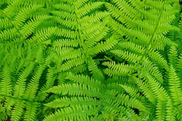 Fougère feuilles vue de dessus gros plan fond Photo Premium