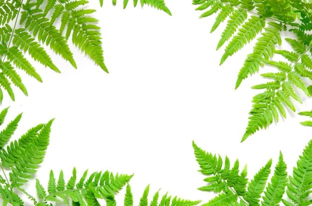 Fougère tropicale verte feuilles sur fond blanc Photo Premium