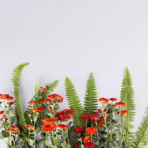 Fougère verte, feuilles, fleurs, table Photo gratuit