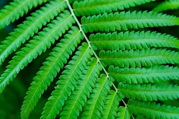 Fougères feuilles vertes fermer fond Photo Premium