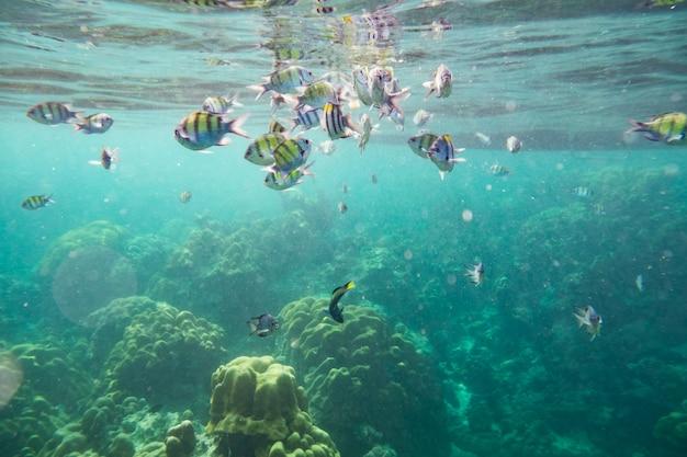 Foule de poissons sous l'eau autour du récif Photo Premium