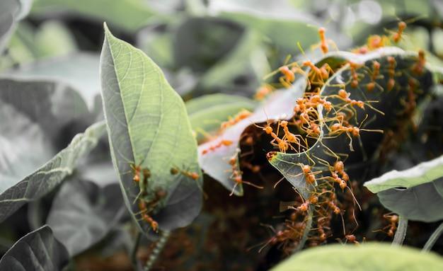 Fourmis orange Photo Premium