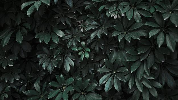 Fourré De Plante Sombre Photo gratuit