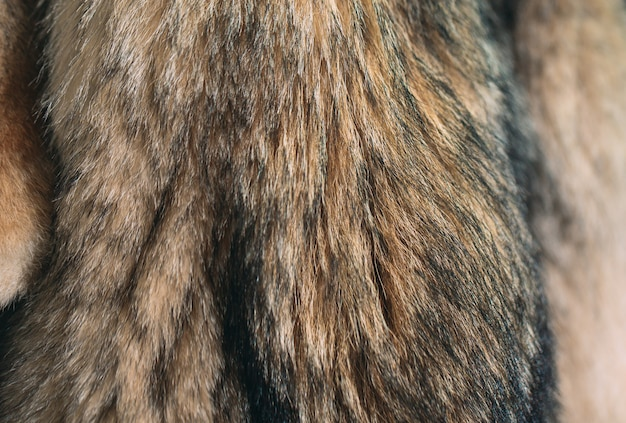 Fourrure animale les renards, les ratons laveurs, les loups, les castors, les visons et les nutries sont suspendus après le traitement. Photo Premium