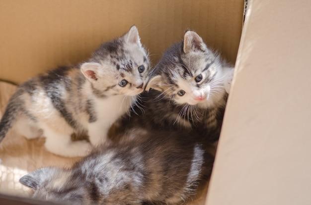 Fourrure, chaton, dans, carton Photo Premium