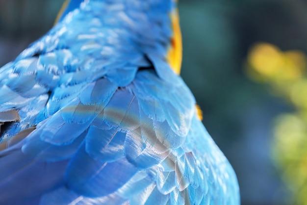 Fragment D'une Aile D'oiseau Perroquet Avec Des Plumes Bleues, Gros Plan Photo Premium