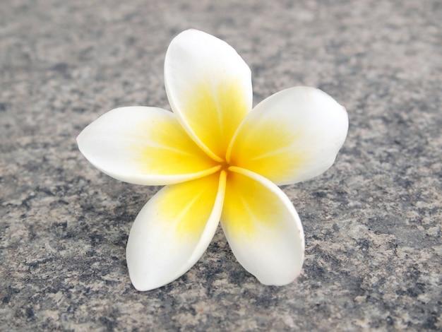 Frangipanier aux fleurs tropicales Photo Premium