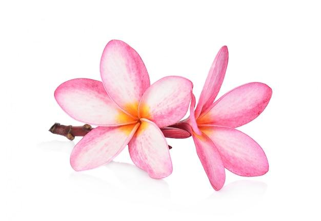Frangipanier de fleurs tropicales (plumeria) isolé sur fond blanc Photo Premium