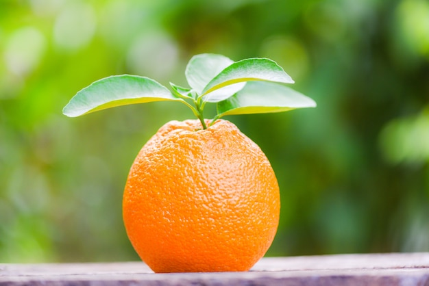 Fruit orange sur la nature verte en été Photo Premium