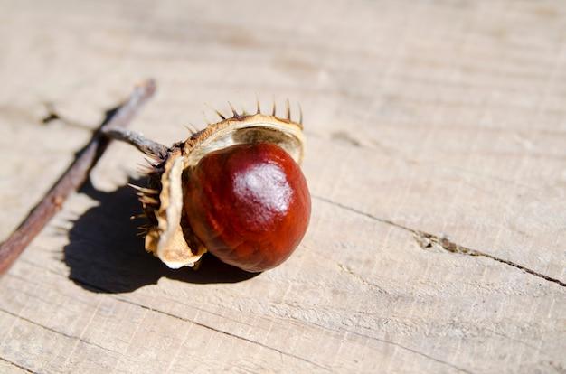 Les fruits de la châtaigne sauvage viennent de tomber d'une coquille ouverte sur une planche de bois. fermer Photo Premium