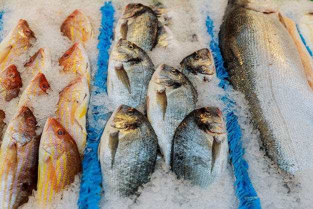 Fruits de mer frais sur glace au marché aux poissons Photo Premium
