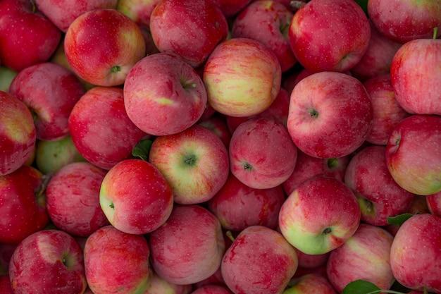 Fruits Texture Photo Premium