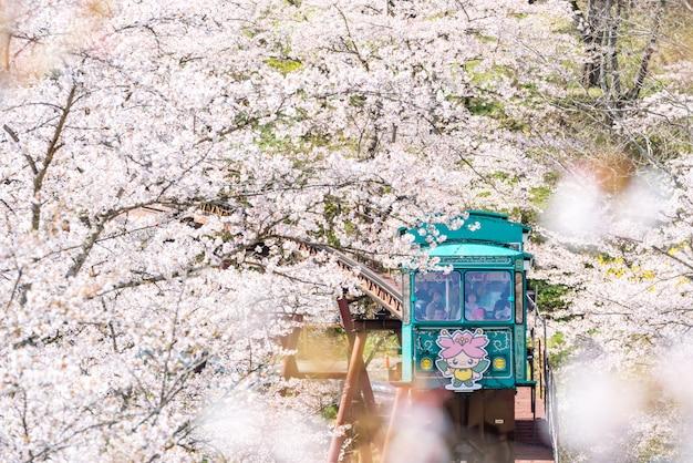 Funaoka, japon - voiture de piste avec une belle fleur de cerisier Photo Premium