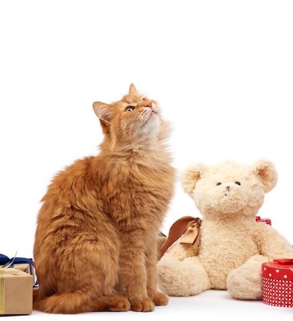 Funny Cat De Gingembre Adulte Assis Au Milieu De Boîtes Enveloppées Dans Du Papier Brun Et Attachées Avec Un Ruban De Soie Photo Premium