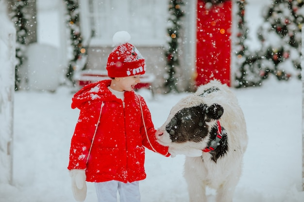 Garçon Posant Avec Petit Taureau Au Ranch D'hiver Avec Un Décor De Noël. Il Neige. Photo Premium