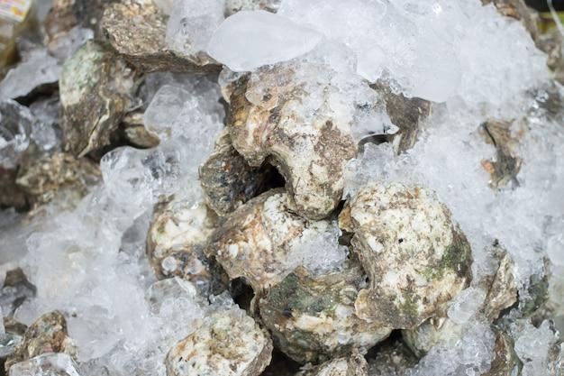 Gardez les huîtres fraîches sur la glace pour les fruits de mer Photo Premium