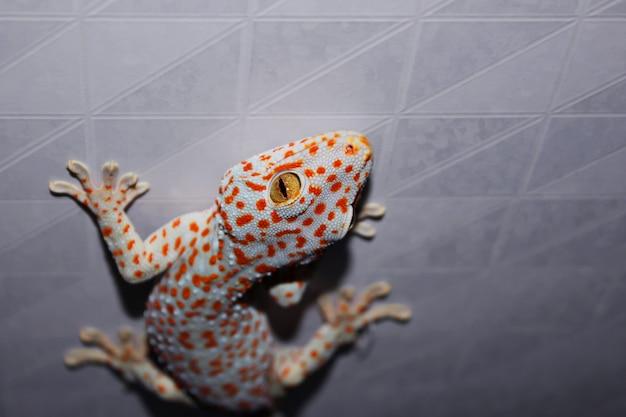 Gecko sur le mur Photo Premium