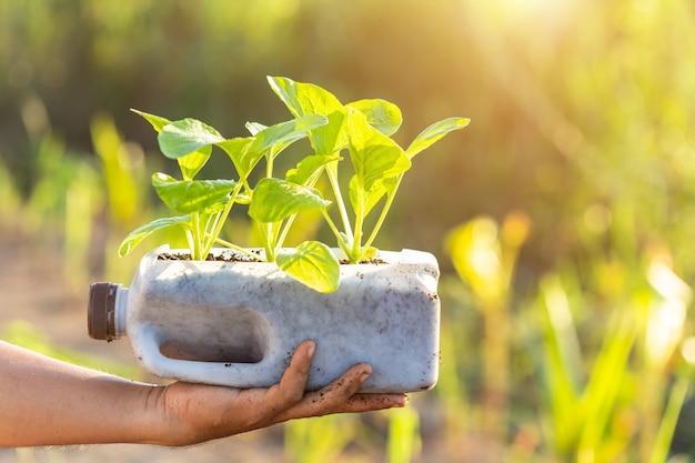 Gens, planter légume, dans, bouteille plastique Photo Premium