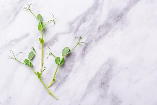 Germes de petits pois verts frais Photo Premium