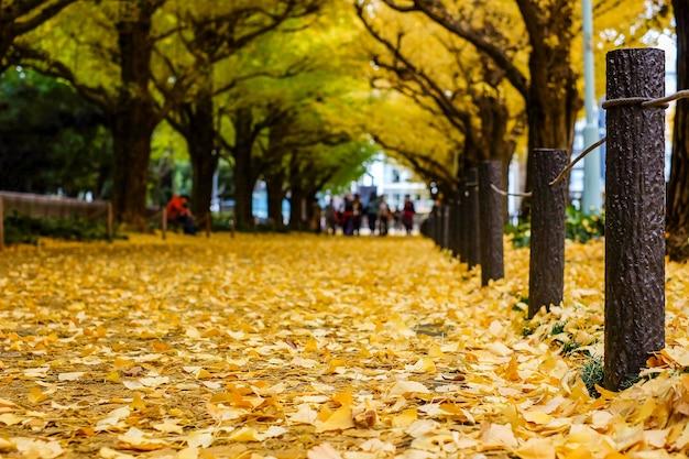 Ginkgo doré feuilles tombant autour du sol, saison d'automne à tokyo. Photo Premium