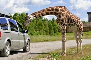 Girafe douce Photo gratuit