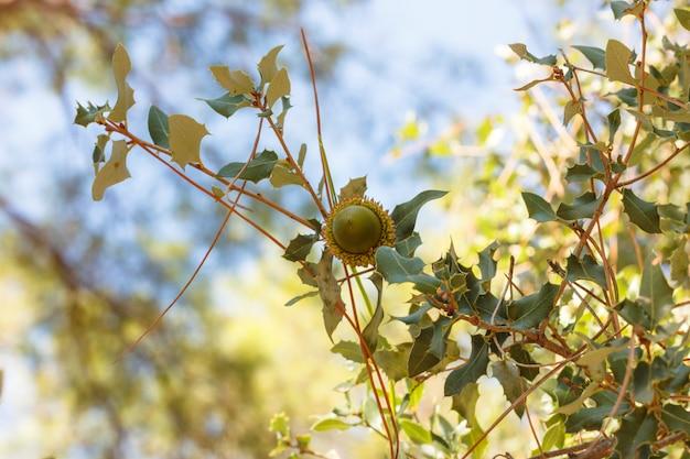 Gland sur une branche d'arbre dans la forêt d'automne Photo Premium