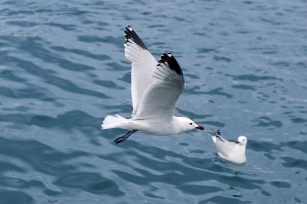 Goélands actifs mouettes au-dessus de la mer bleue Photo Premium