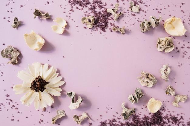 Gommage corporel fait maison; gousse séchée et fleur blanche sur fond rose Photo gratuit