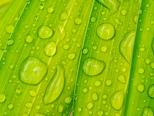 Goutte d'eau sur une feuille de palmier verte Photo Premium