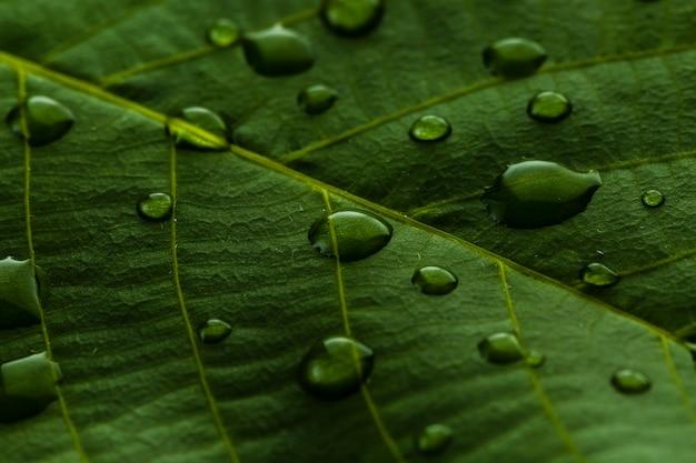 Gouttelettes de feuilles de plantes vertes Photo gratuit