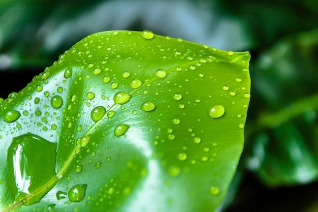 Gouttes d'eau sur les feuilles vertes. Photo Premium