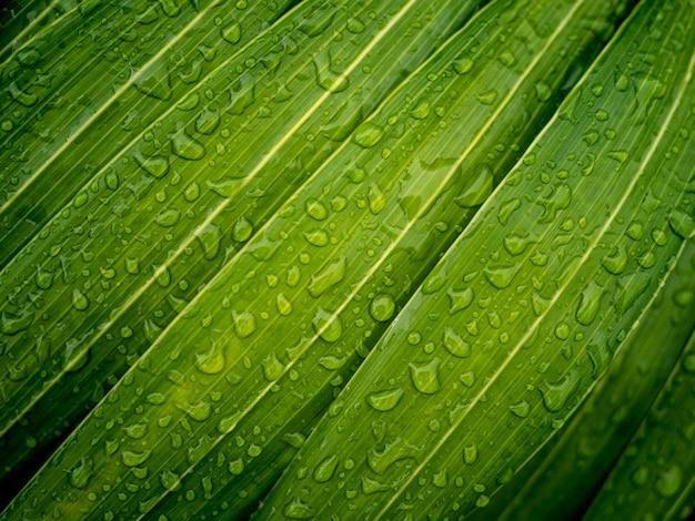 Gouttes d'eau sur les feuilles vertes Photo Premium