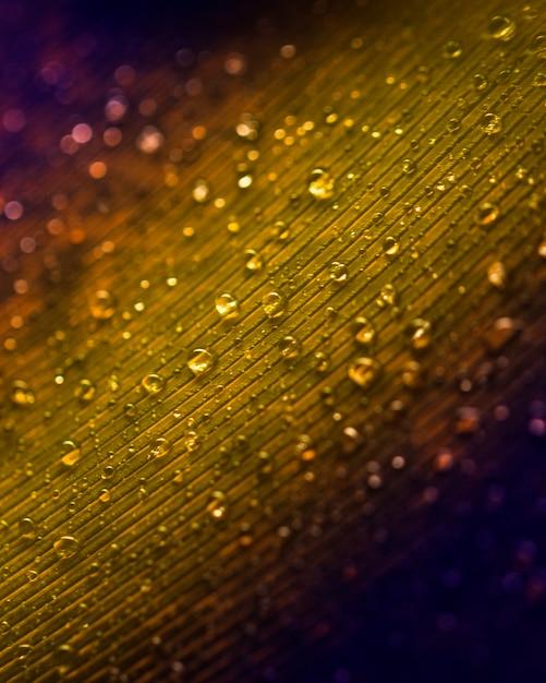 Gouttes d'eau sur la texture de la plume de paon Photo gratuit