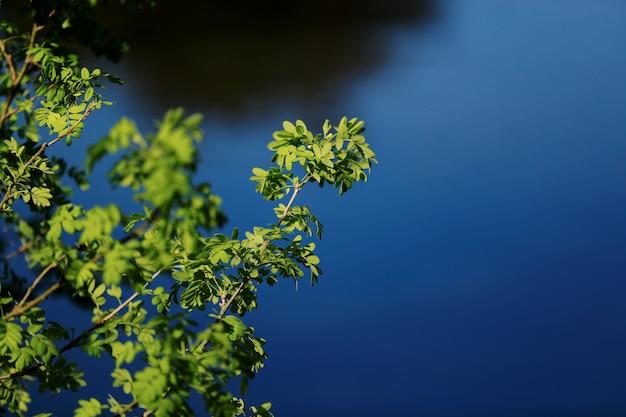 Gouttes d'eau tombant d'une feuille de bambou Photo Premium