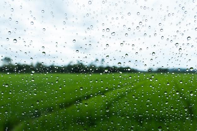 Gouttes d'eau sur le verre avec fond de rizière vert Photo Premium