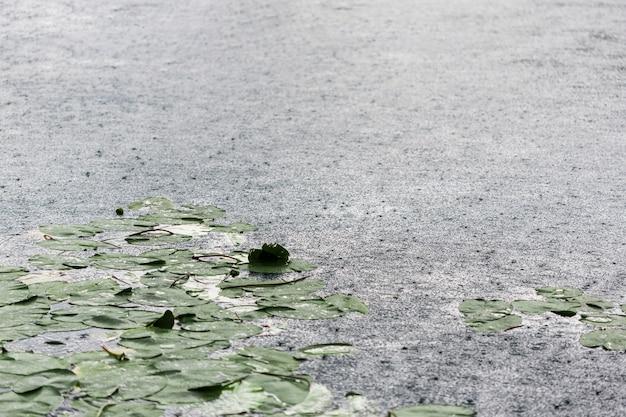 Gouttes de pluie et nénuphars à la surface du lac Photo gratuit