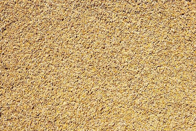 Grain de blé grain texture fond Photo Premium