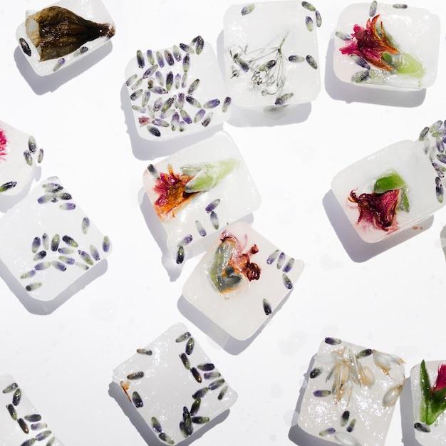 Graines et fleurs dans des blocs de glace Photo gratuit