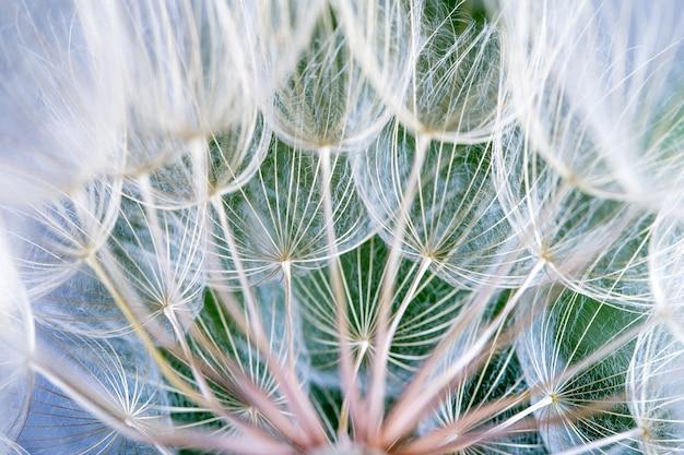 Graines de pissenlit dans le fond vert Photo Premium