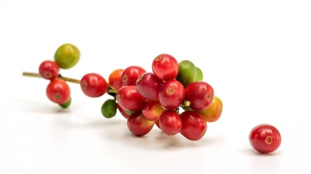 Grains de café arabica frais Photo Premium